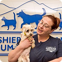 Adopt A Pet :: Shelby - Cashiers, NC