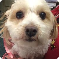 Adopt A Pet :: Buddy - Oak Ridge, NJ