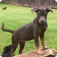 Adopt A Pet :: Ashes - North Brunswick, NJ