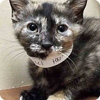 Adopt A Pet :: Gretel - Oswego, IL