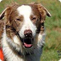 Adopt A Pet :: Smoke - Allen, TX