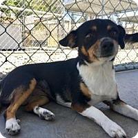 Adopt A Pet :: Dahlia - Yucaipa, CA