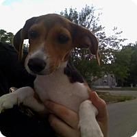 Adopt A Pet :: BEA - San Antonio, TX