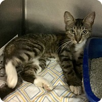 Adopt A Pet :: Robin - Newport, NC
