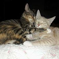 Adopt A Pet :: Linus and Lucy - Fairfax, VA