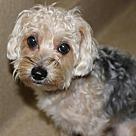 Adopt A Pet :: 25376 Bella