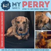 Adopt A Pet :: Perry - New Port Richey, FL