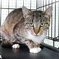 Adopt A Pet :: Amber - Marlinton, WV