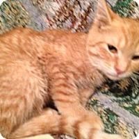 Adopt A Pet :: Abbott - East Hanover, NJ