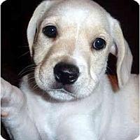 Adopt A Pet :: Doc - Sugarland, TX