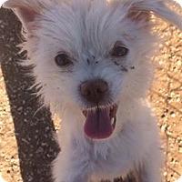 Adopt A Pet :: Spunky - Post, TX