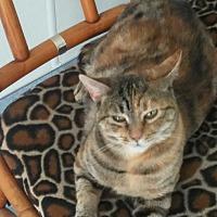 Adopt A Pet :: Georgia - El Cajon, CA