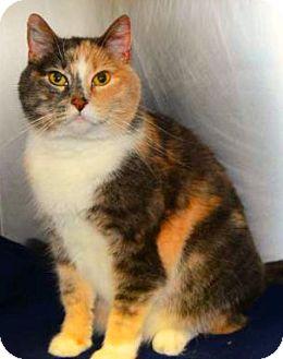Domestic Longhair Cat for adoption in Buford, Georgia - Makayla