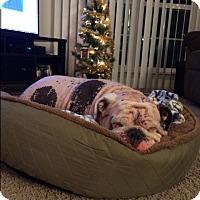 Adopt A Pet :: Hooch - Strongsville, OH