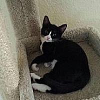 Adopt A Pet :: Chiquitica - Miami, FL