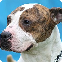 Adopt A Pet :: Petey - Bloomfield, NJ