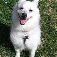 Adopt A Pet :: Jackson - St. Louis, MO