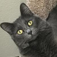 Adopt A Pet :: Glenda - Palo Alto, CA