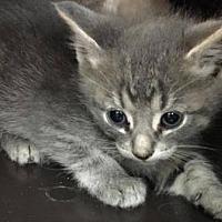 Adopt A Pet :: Dart - Edmonton, AB