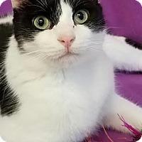 Adopt A Pet :: Camilla - Colfax, IA