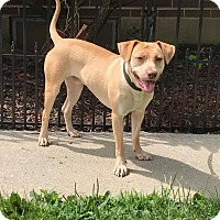 Adopt A Pet :: Gunner - New Oxford, PA