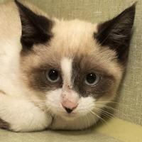 Adopt A Pet :: Taryn - Fort Collins, CO