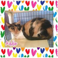 Adopt A Pet :: Addie - Jasper, IN