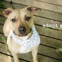 Adopt A Pet :: Aisha - Independence, MO
