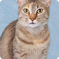 Adopt A Pet :: Lady Lemon - Encinitas, CA