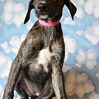 Adopt A Pet :: Sawa - Waldorf, MD