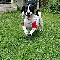 Adopt A Pet :: Tyson - New Oxford, PA