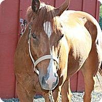 Adopt A Pet :: Temptation - East Granby, CT