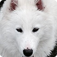 Adopt A Pet :: Sammie Jo - Arvada, CO