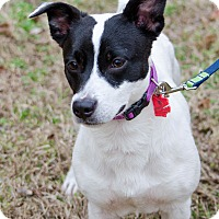 Adopt A Pet :: Winston - Arlington, TN
