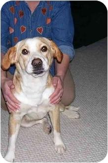 Beagle Mix Dog for adoption in Osceola, Arkansas - Trixie