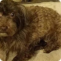 Adopt A Pet :: Sofie - Detroit, MI