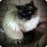 Adopt A Pet :: Augustus - Fairborn, OH