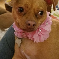 Adopt A Pet :: CoCo - Lake Jackson, TX