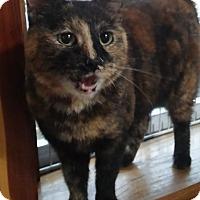 Adopt A Pet :: Tinkerbell - Witter, AR