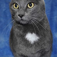 Adopt A Pet :: Shadow - Centerton, AR
