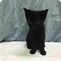 Adopt A Pet :: Storm - St. Cloud, FL