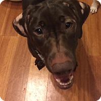 Adopt A Pet :: Ali - Charleston, SC