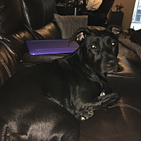 Adopt A Pet :: Harley (COURTESY POST) - Baltimore, MD