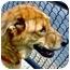 Photo 1 - Shepherd (Unknown Type)/Collie Mix Dog for adoption in Inman, South Carolina - Bob
