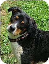 Beagle Mix Dog for adoption in Jeffersonville, Indiana - Maggie