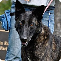 Adopt A Pet :: Sierra in CA - Jamestown, CA