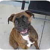 Adopt A Pet :: Stella - Thomasville, GA