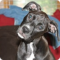 Adopt A Pet :: Jezi - ARDEN, NC