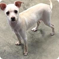 Adopt A Pet :: Elsa - Brattleboro, VT