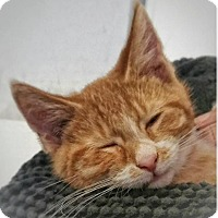 Adopt A Pet :: Zoom-Loves Kids - Oberlin, OH